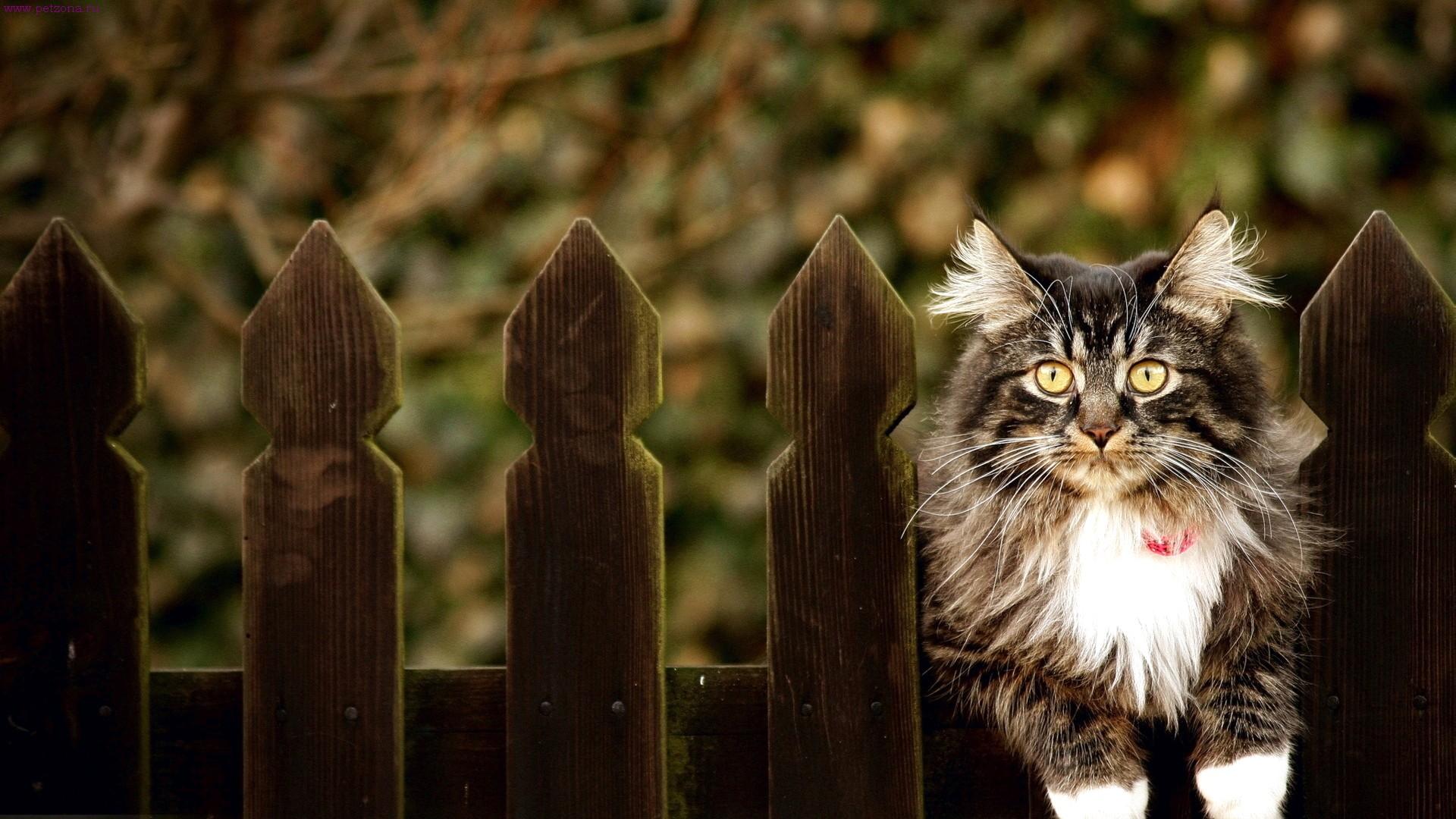 14 фактов о кошках