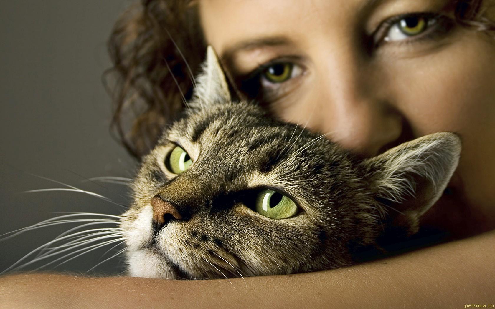 7 удивительных признаков того, что ваша кошка вас любит