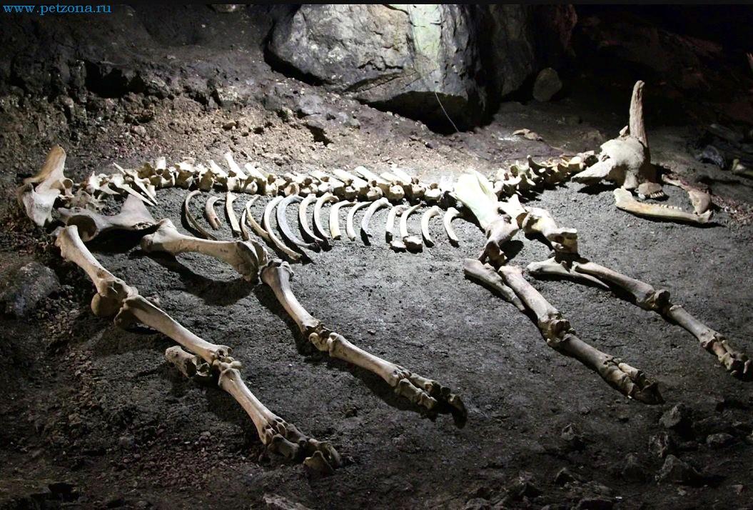 Из глубины веков: ископаемые животные