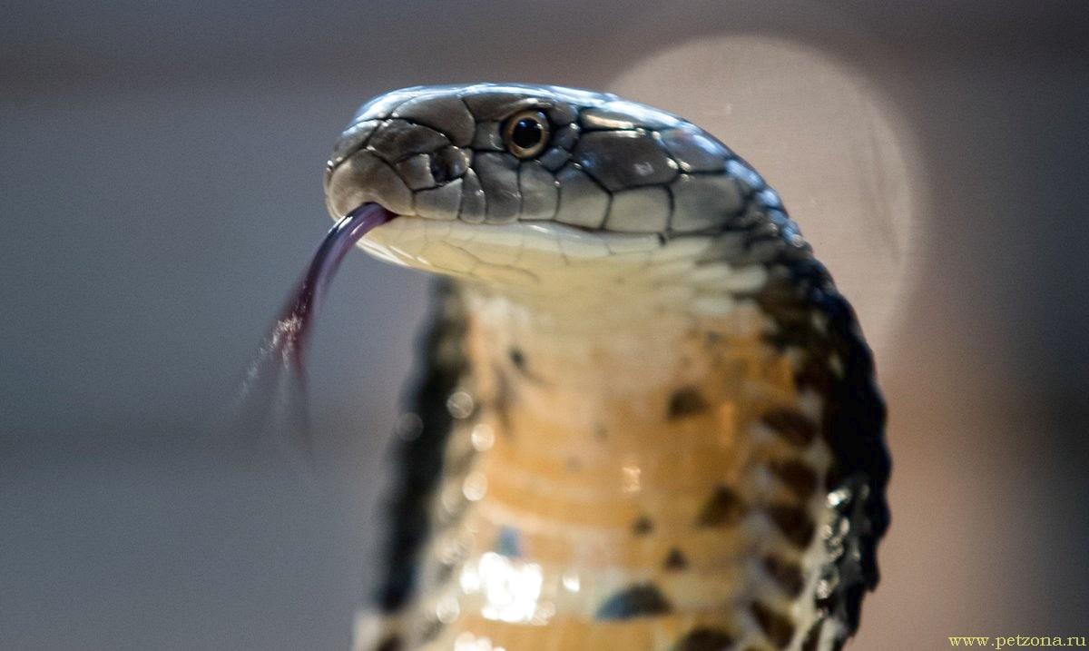 Топ-10 самых опасных животных мира