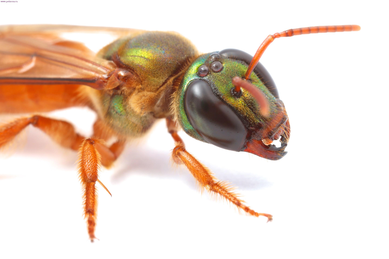 Как насекомые видят в темноте?