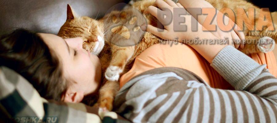 Как определить любит ли вас кошка?