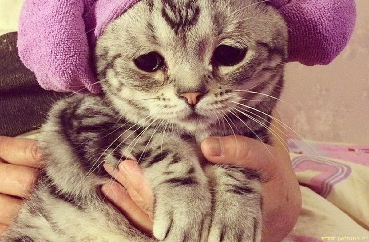 Отсутствие аппетита у кошки