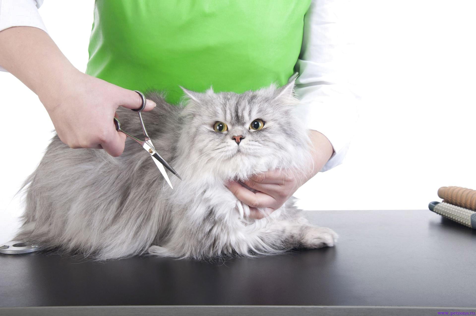 Преимущества стрижки котов на дому