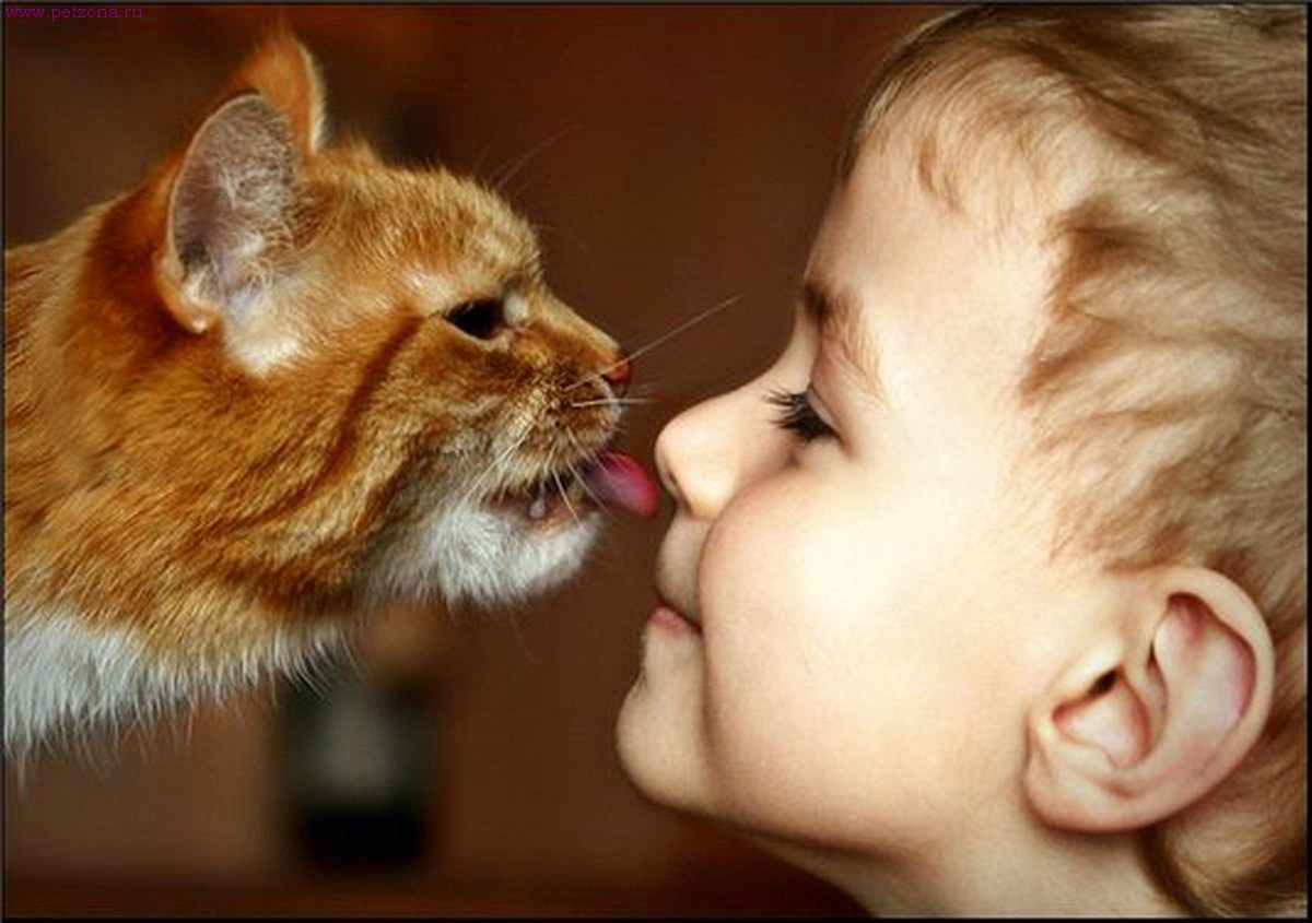 Кошка лижет руку: норма или отклонение