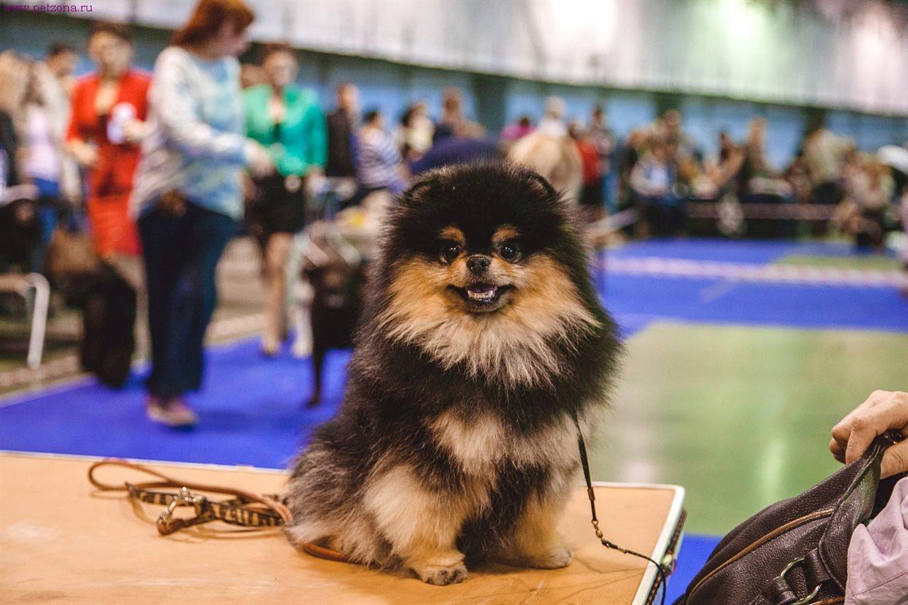 Участвуем в выставке собак