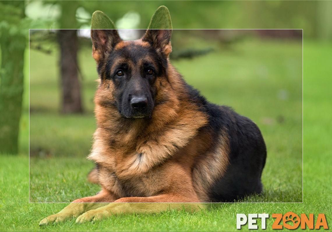 Какая порода собаки подходит именно вам?