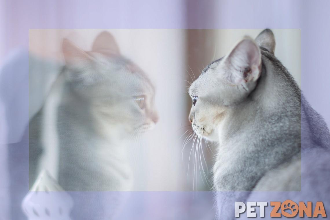 Кошки понимают, когда мы их зовем. Они просто игнорируют