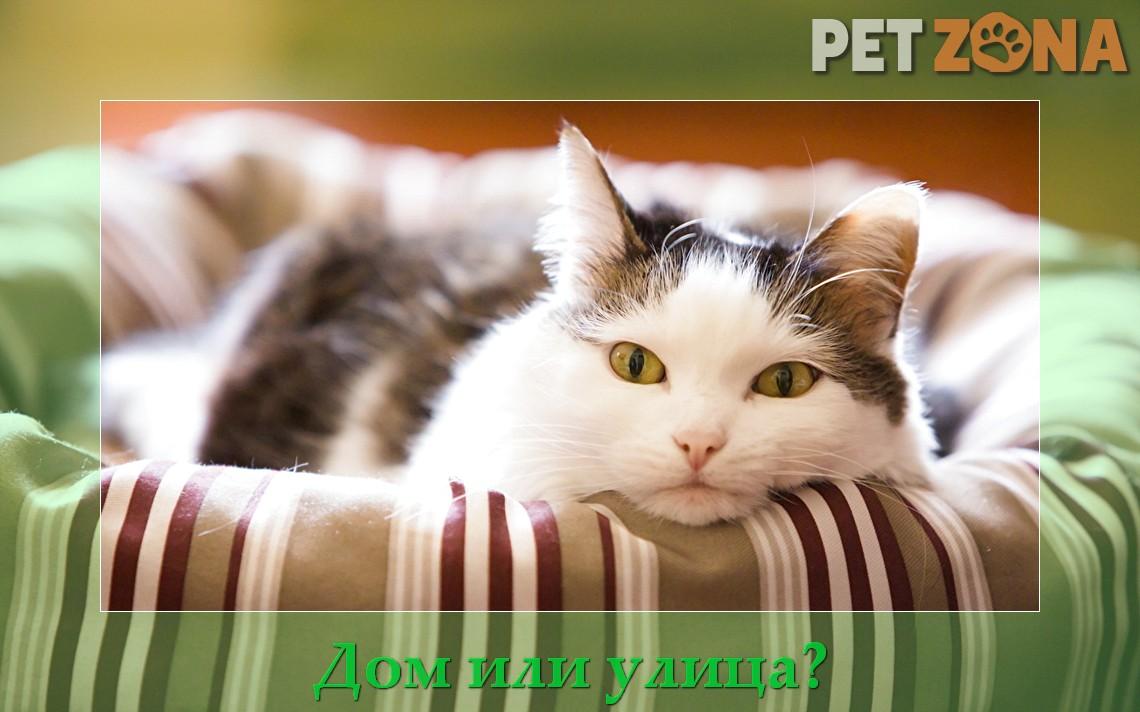 Квартира или улица: где котам лучше?