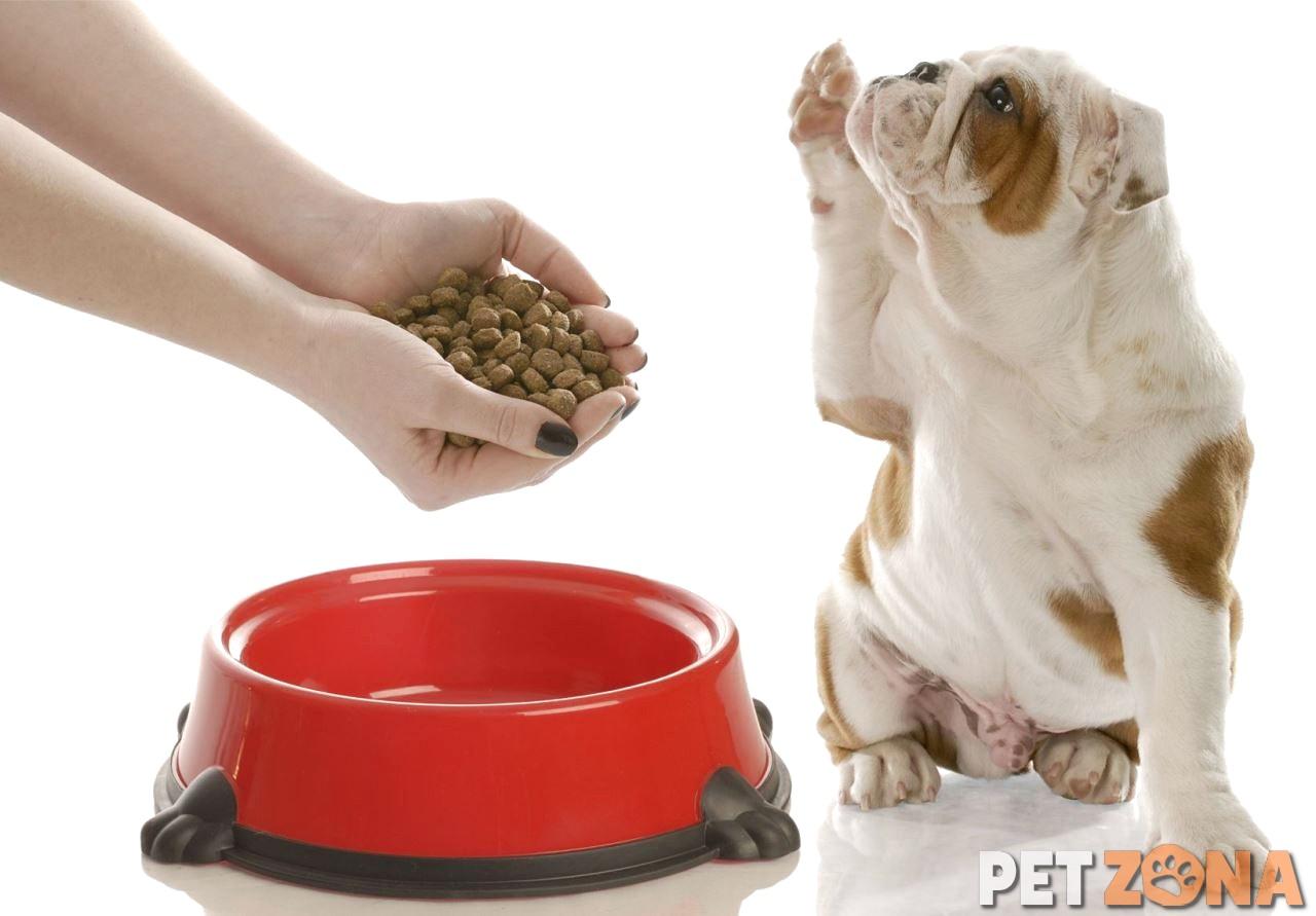 Можно ли кормить собаку сухим кормом каждый день?
