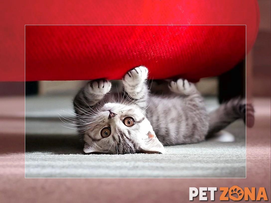Причины игры в «прятки» у котов