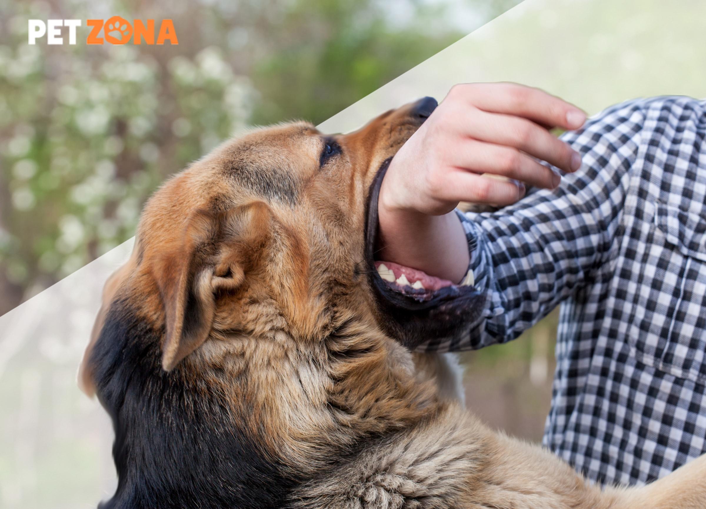 Что делать, если вас укусила собака?