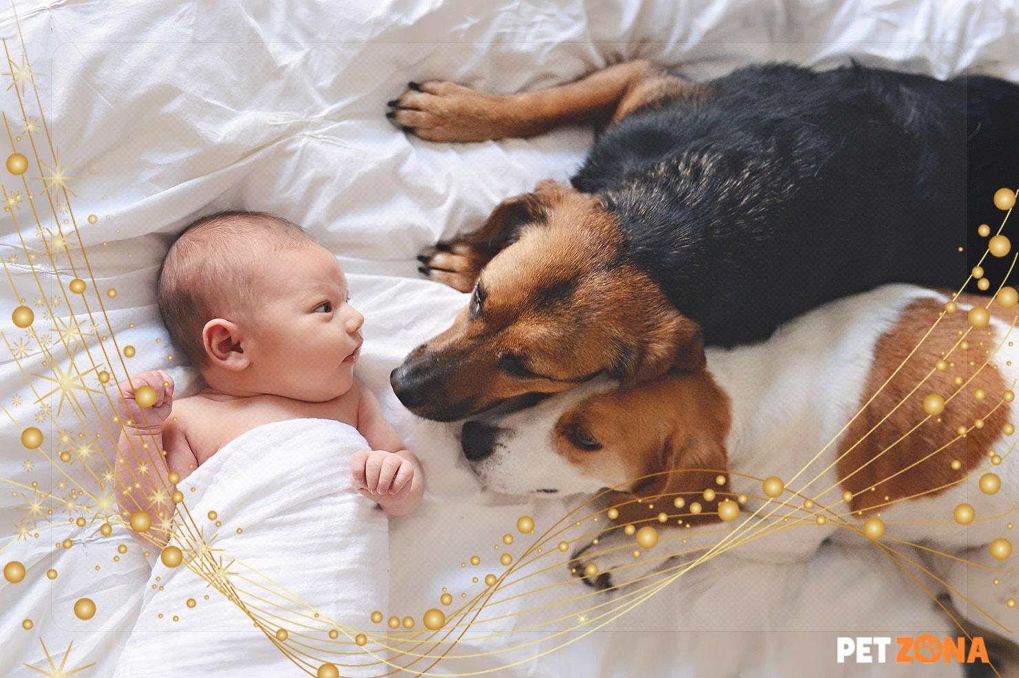 Готовим питомца ко встрече с новорожденным