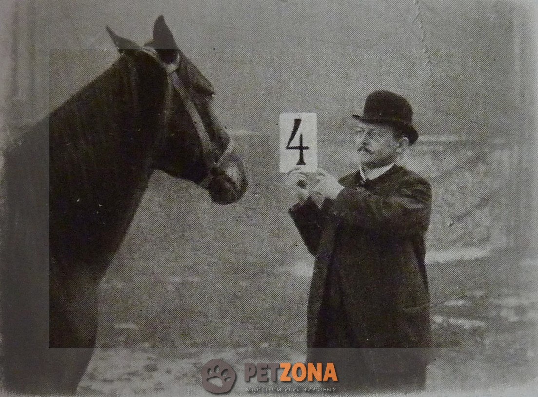 История лошади, которая умела считать - Умный Ганс