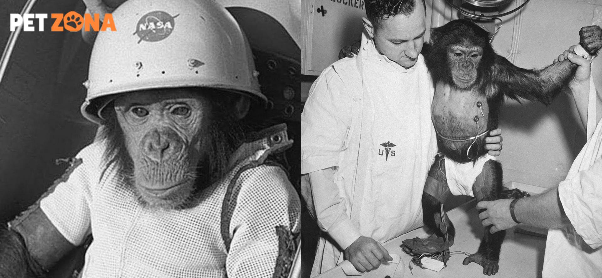 Как шимпанзе и лошадь изменили ход истории?