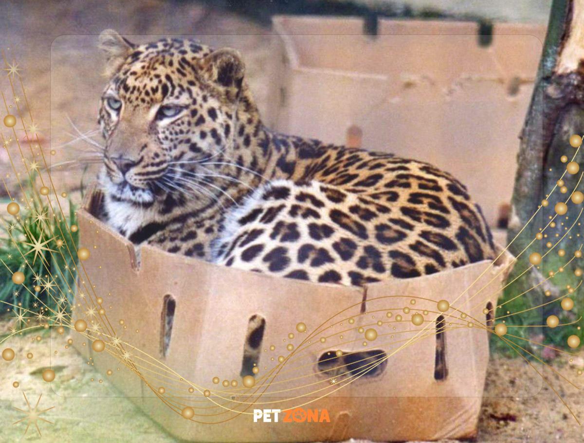 Почему кошки без ума от картонных коробок?