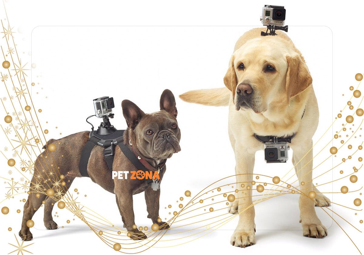10 необычных вещей для собак