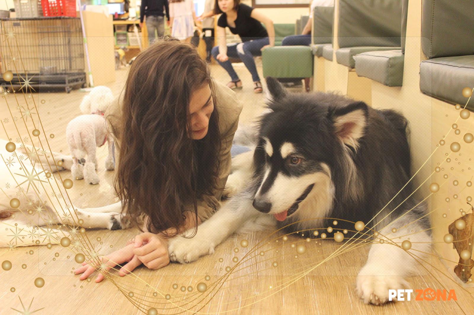 Животные в кафе. Релакс – заведения Японии
