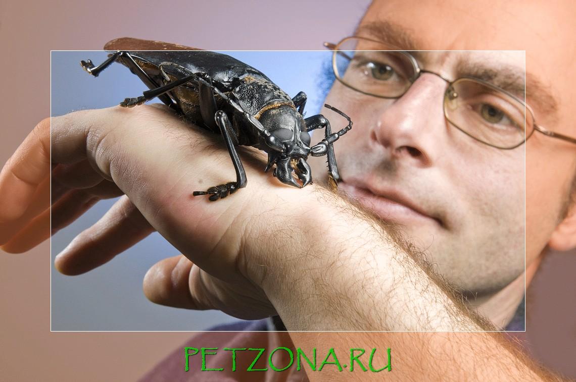 5 самых необычных жуков