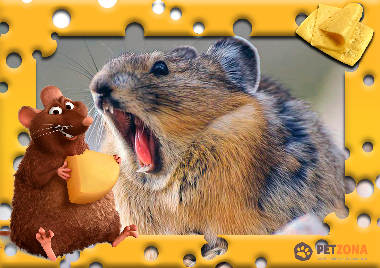 Десять необычных фактов о мышах