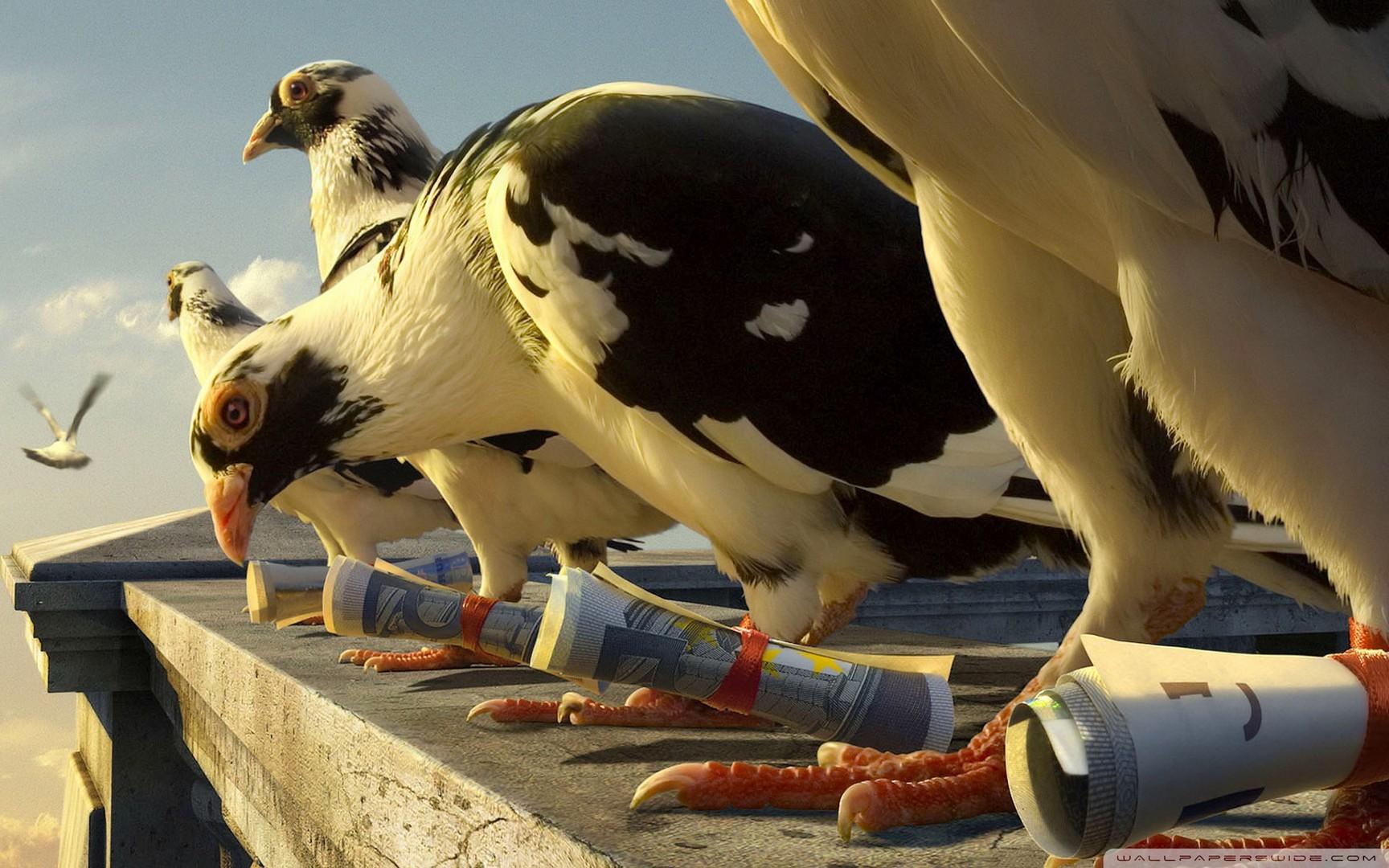 Откуда почтовые голуби знают куда им лететь?