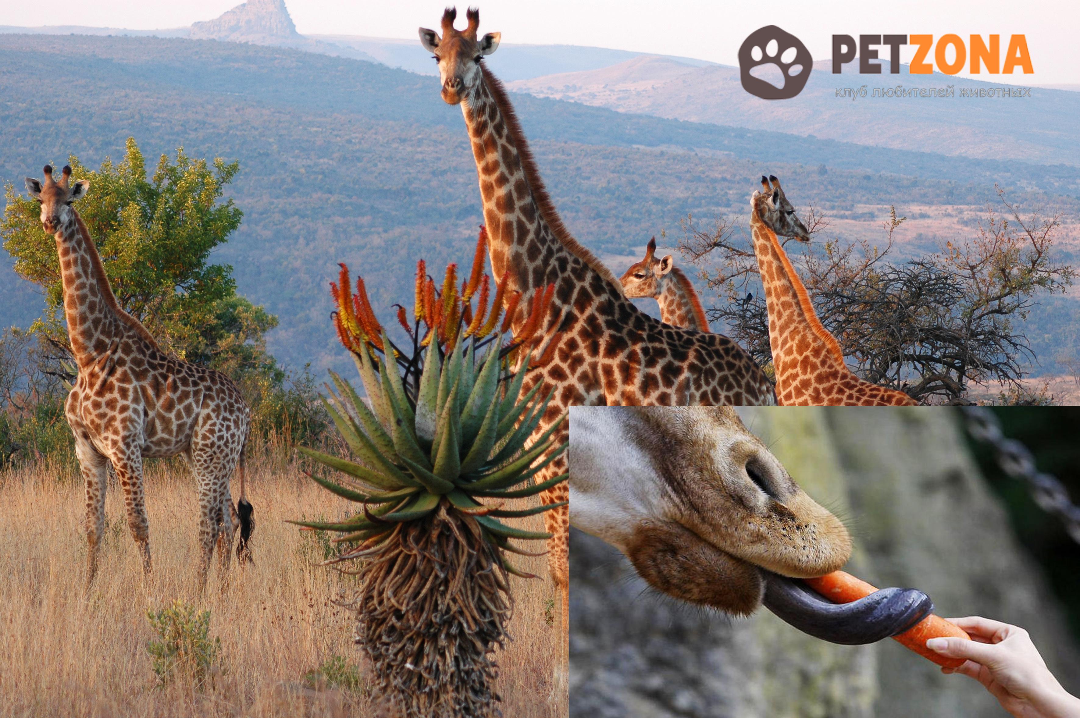 4 малоизвестных факта об африканских животных