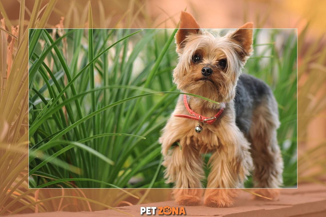 5 самых мимишных пород собак