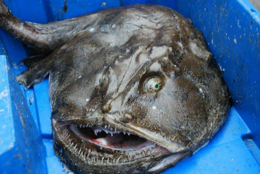 5 страшных обитателей морских глубин