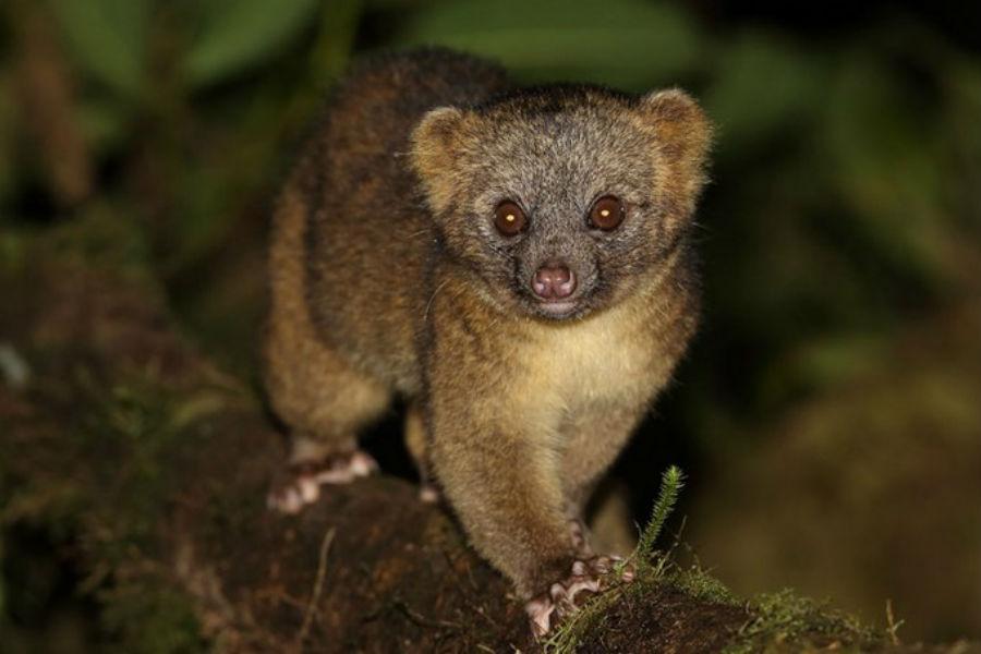 5 видов животных, о которых мир узнал в 21 веке