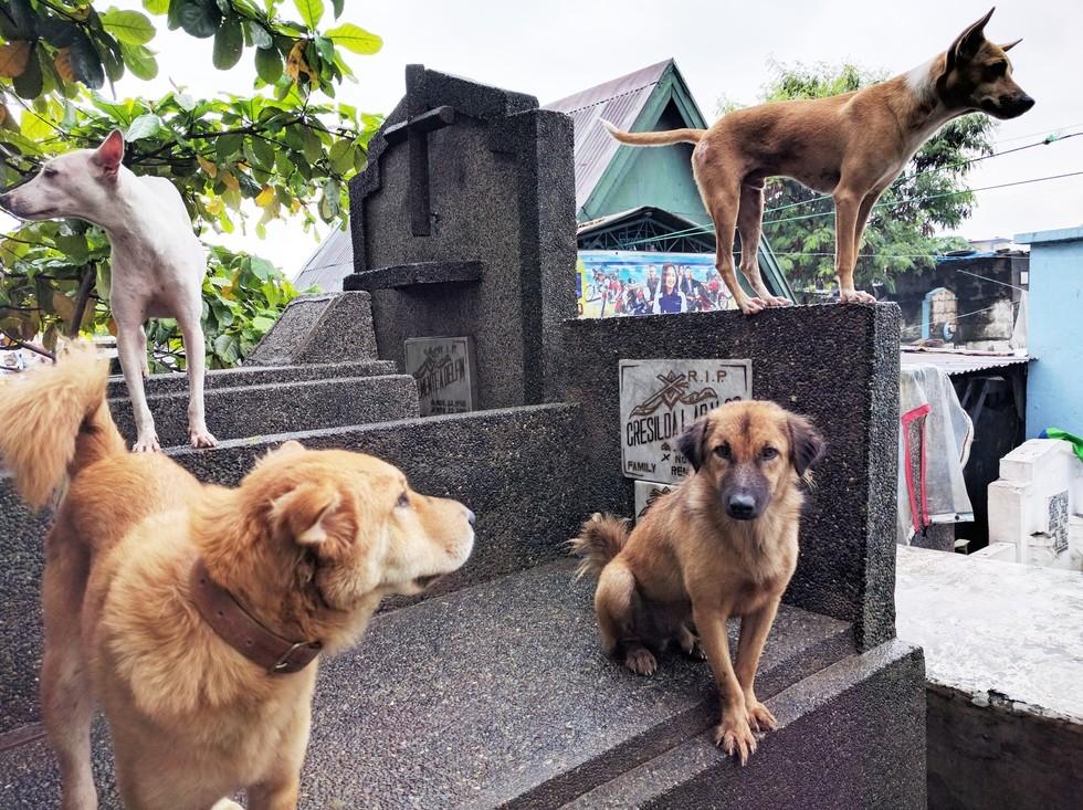Поверия, связанные с животными
