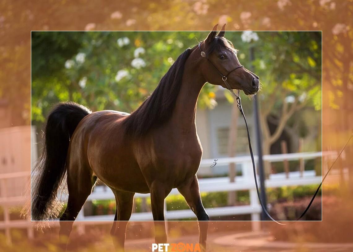 Три самые красивые породы лошадей