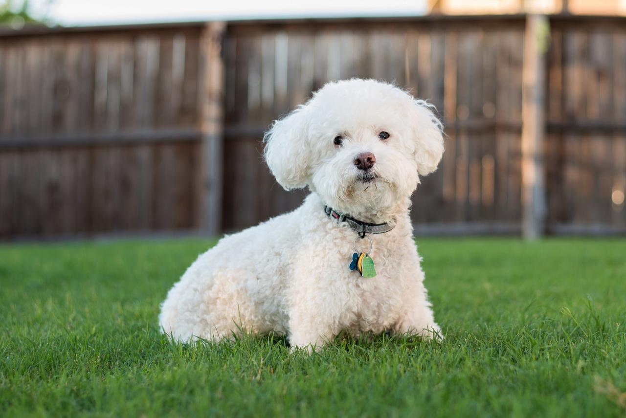 Лучшие породы собак для детей и семьи
