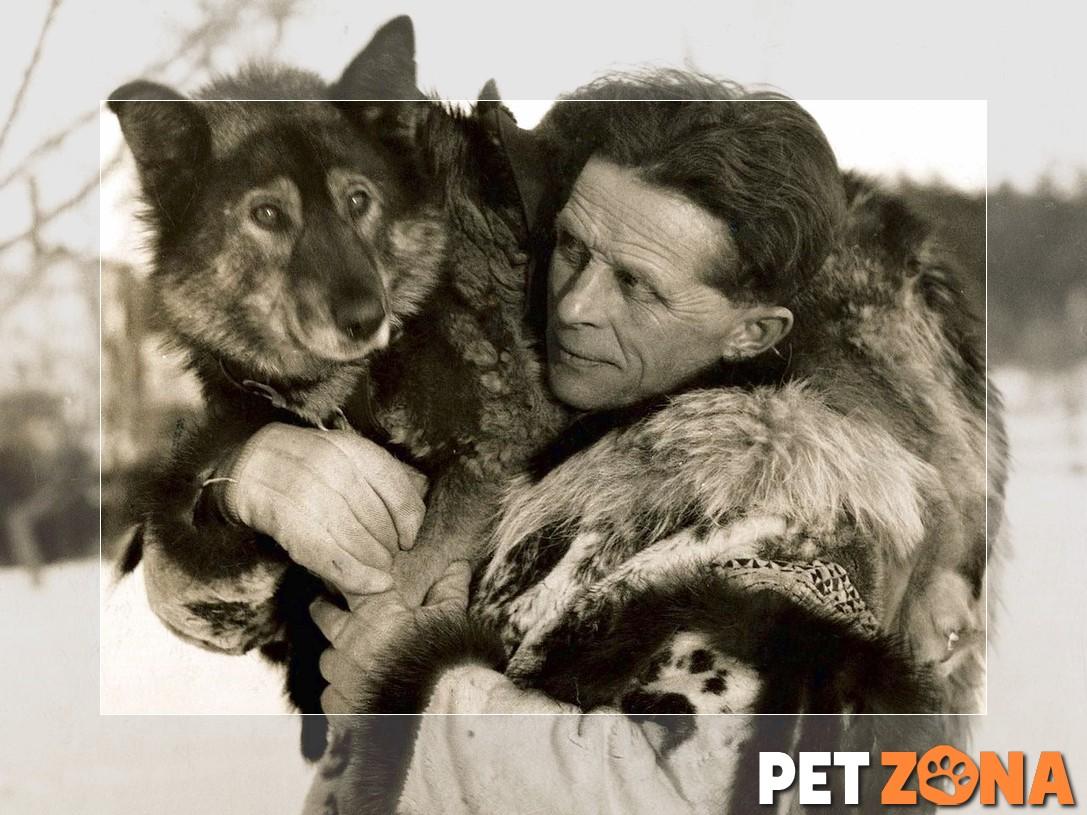 15 именитых животных, сыгравших важную роль в истории населения земли (часть 1)