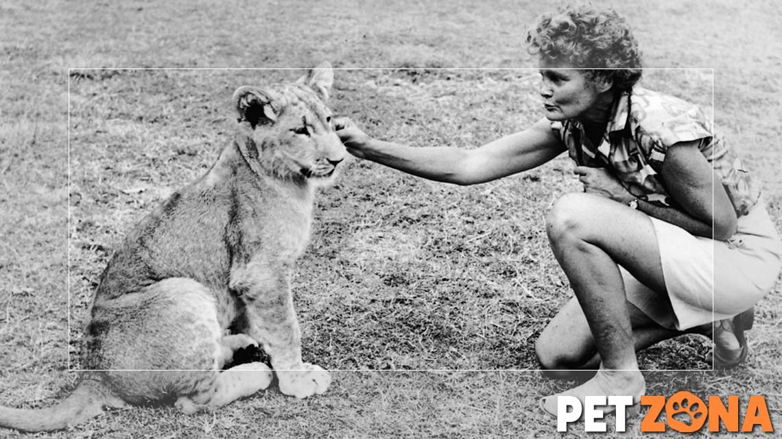 15 именитых животных, сыгравших важную роль в истории населения земли (часть 2)