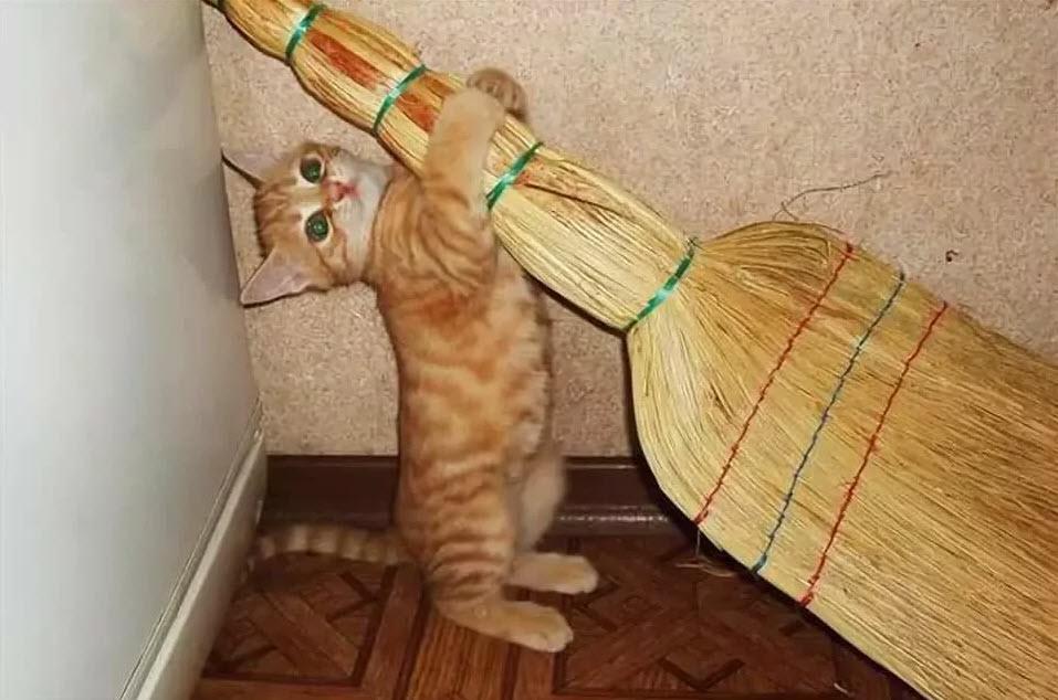 Что хорошего в кошках?