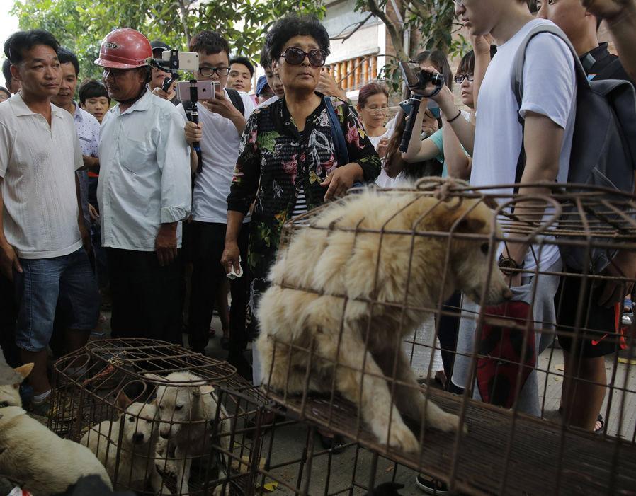 Фестиваль еды в китайской провинции Гуанси. Лучше бы я его не посещала