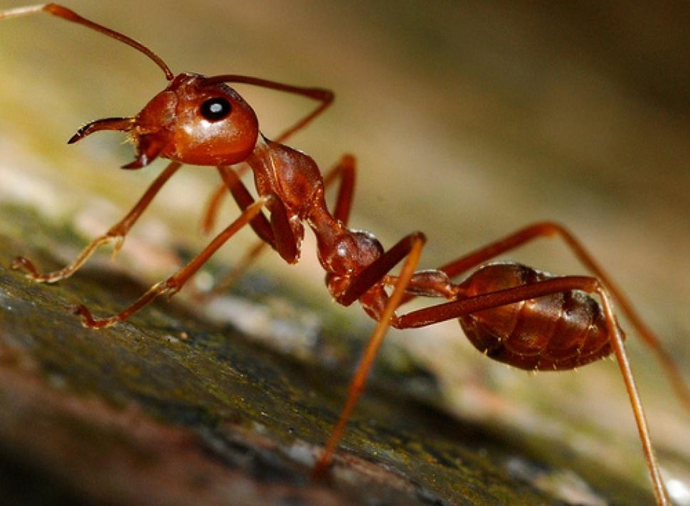 Самые интересные факты о животных – поражают и восхищают