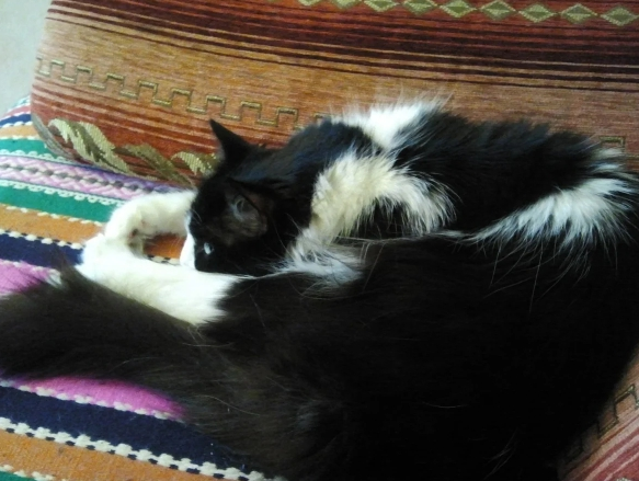 """""""Мне мяско, а ей оливки"""". Моя кошка вегетарианка"""