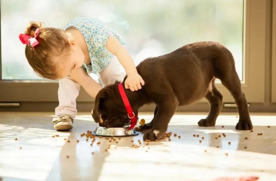 Что можно доверить юному собаководу? Учим детей ответственности за питомца