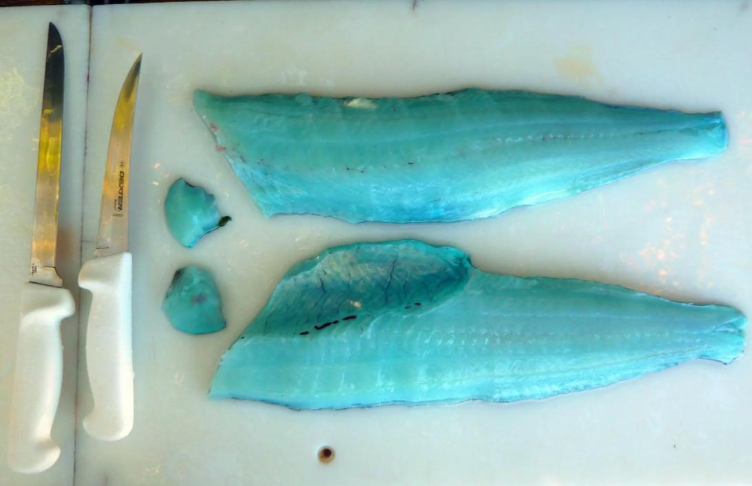 Какова на вкус Ophiodon elongatus? Рыба голубого цвета не только снаружи, но и внутри