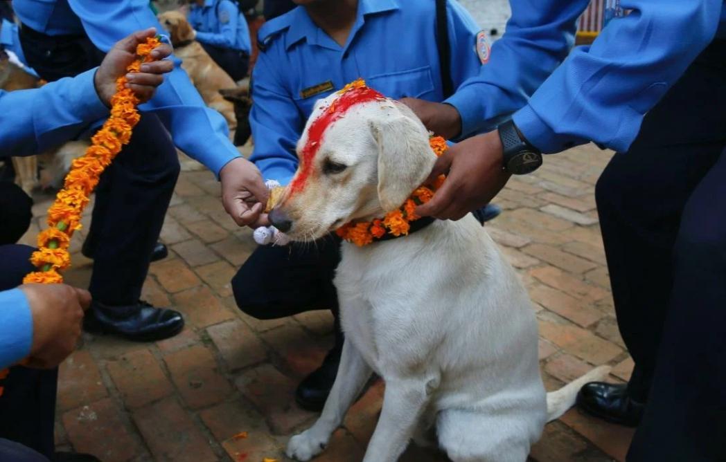 Выполнение команд у собак на уровне ДНК. Эксперимент на улицах Индии