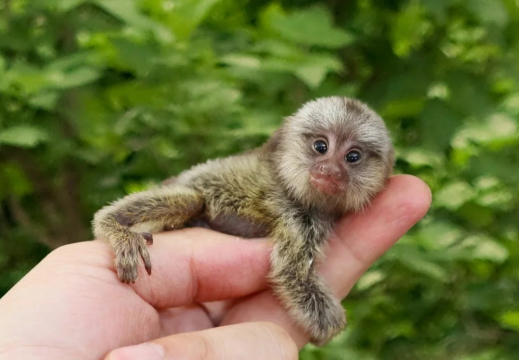 """""""Как игрушка"""". 9 маленьких миленьких представителей животного мира"""