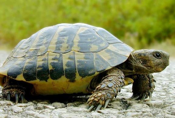 5 животных, которые живут после смерти
