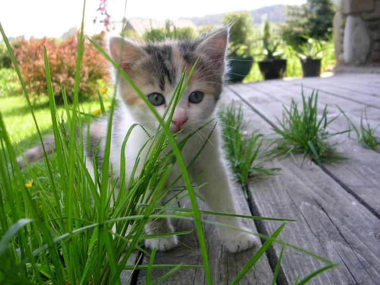 Как приспособить сад для нужд домашних питомцев? На даче с пушистиком без хлопот