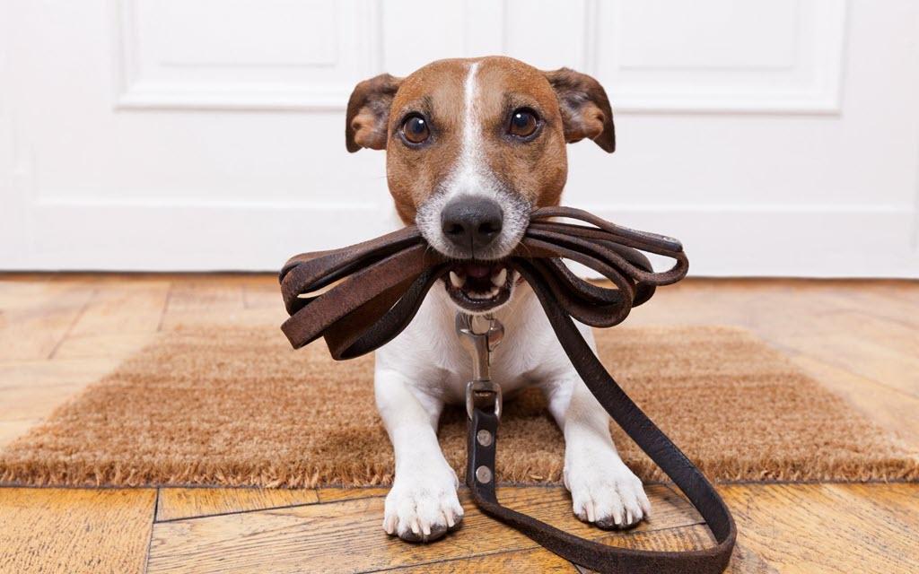 Что необходимо купить для щенка