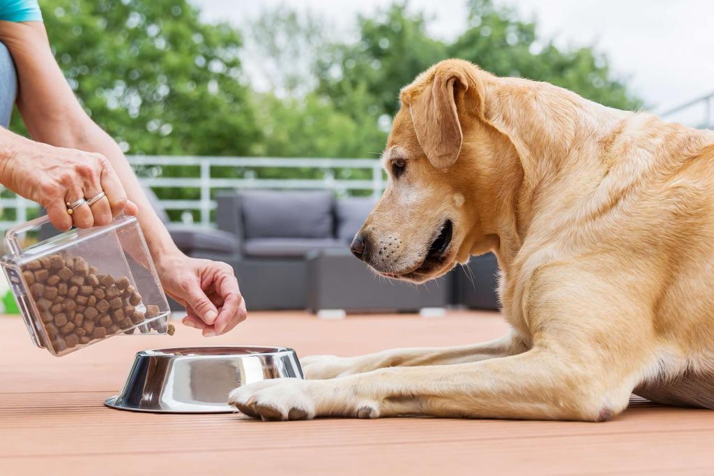 В чем состоит важность правильного выбора корма для собак