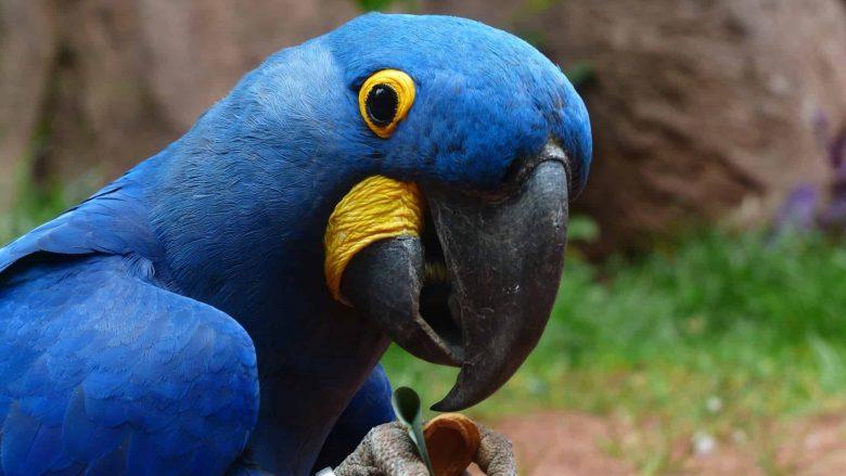 Говорящие попугаи. Смешные пернатые