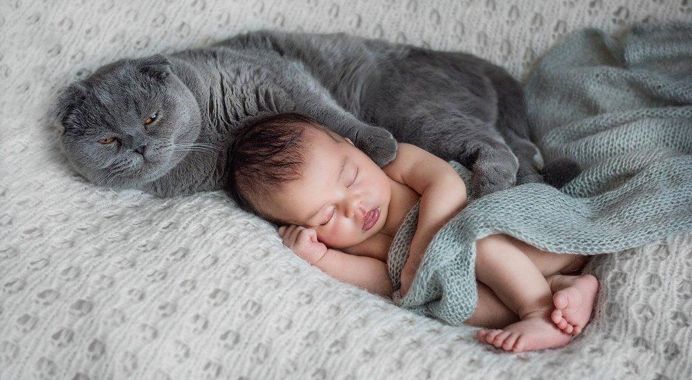 Кошки и младенцы. Первое знакомство