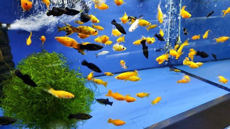 Что нужно новичку, чтобы обустроить аквариум?