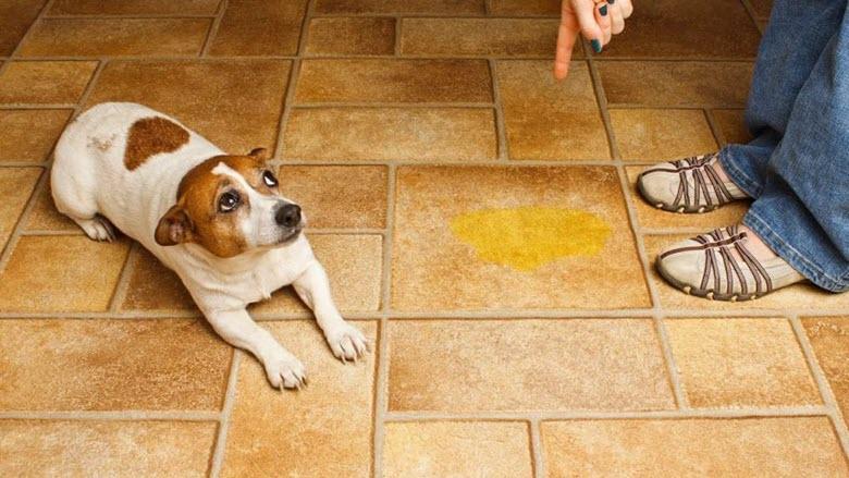 Как отучить домашнего любимца от вредных привычек